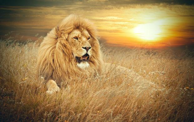 León África