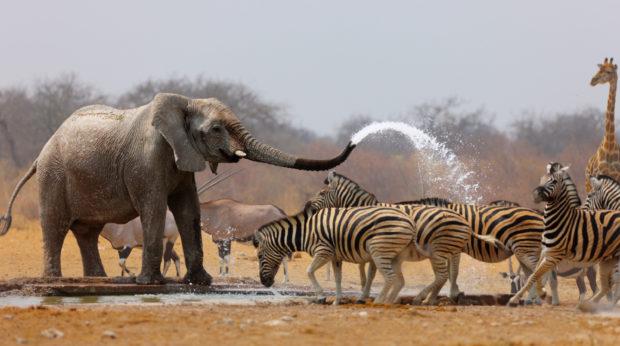 animales safari áfrica