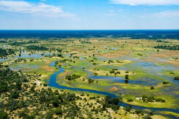 Los Trémulos Bramidos de los Ciervos. Botsuana