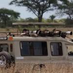 ¿Cómo prepararse para un Safari por Tanzania?