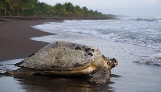 Viajes a Costa Rica. Paraíso de la Biodiversidad