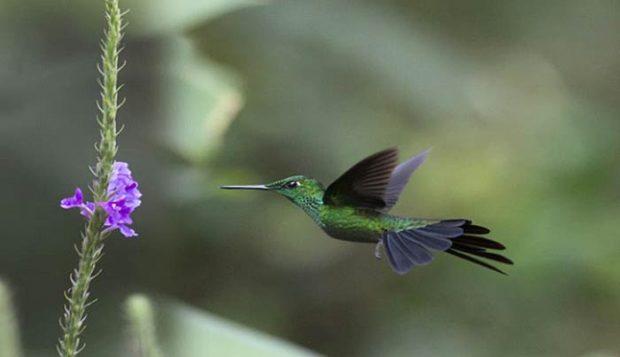 datos curiosos de Costa Rica