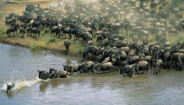 El Verdadero Sentido del lujo en Kenia