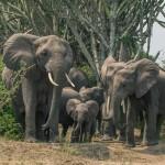 Tarannà Viajes con Sentido con la protección de la fauna en actividades turísticas