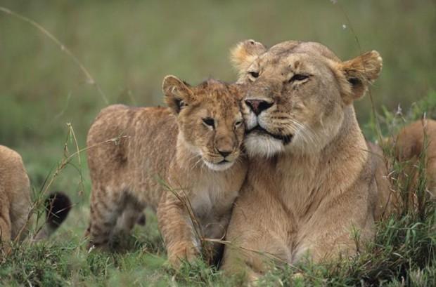 Tarannà con la protección de la fauna