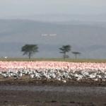 Viajando por Kenya, Tanzania Y Zanzíbar