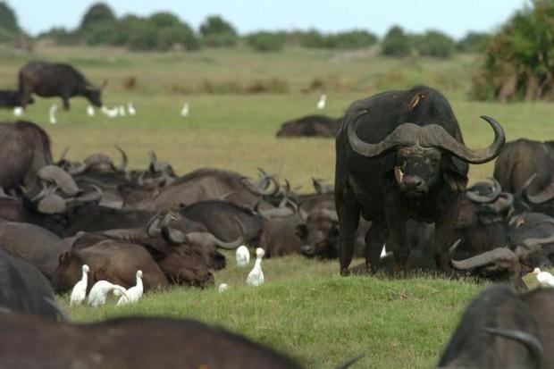 Las Velas Esparcidas del Okavango. Botswana