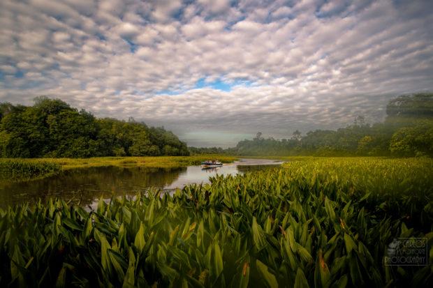 Viaje a Borneo: río Kinabatangan