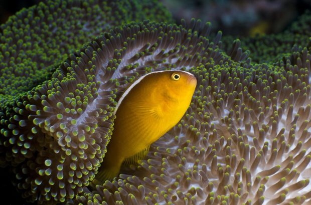 viaje a Borneo: fauna submarina