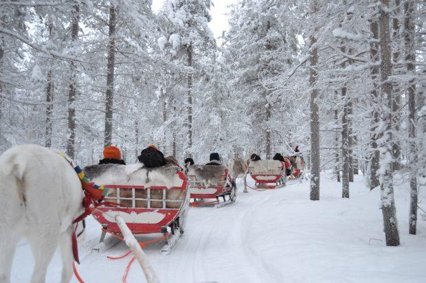 Viaje a Laponia en Navidad: trineo con renos